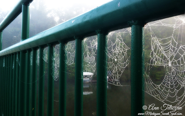 Michigan Sweet Spot Spider webs